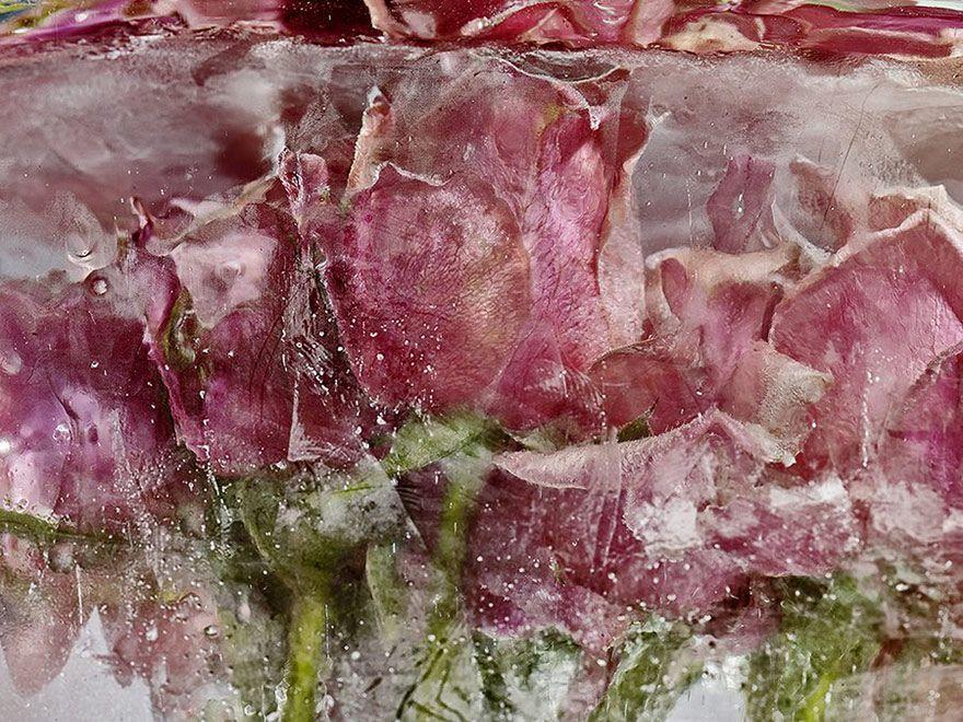 Flowers frozen in blocks of ice | EggHeads