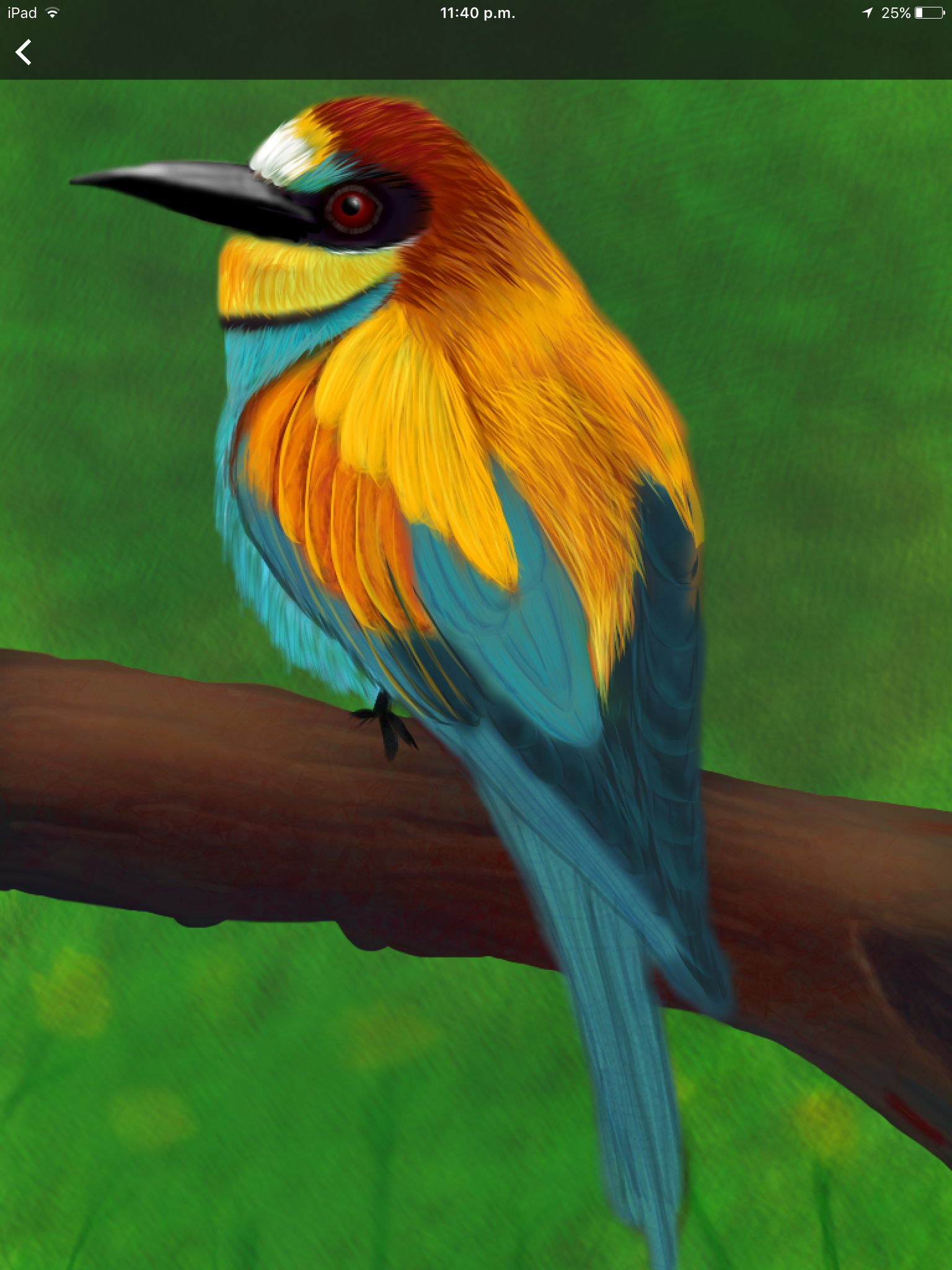 Beecatcher Wild animals photography, Colorful birds