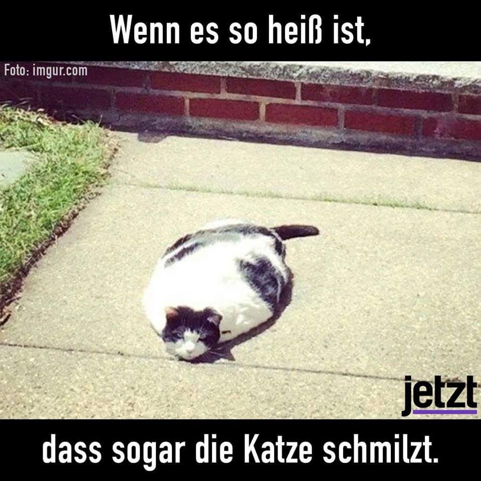 Pin Von Nicole Bachmann Auf Humor Und Spruche Lustige Tiere Katzen Lustige Spruche Tiere Hund