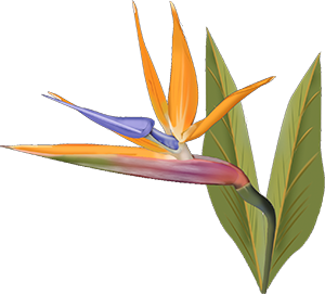Tropical Flowers Png Google Search Birds Of Paradise Flower Birds Of Paradise Watercolor Flowers