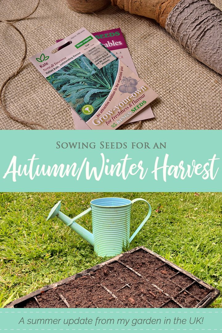 Garden Update: What I'm sowing in July for an autumn/winter harvest! #ukblog #ukbloggers #gardenblog