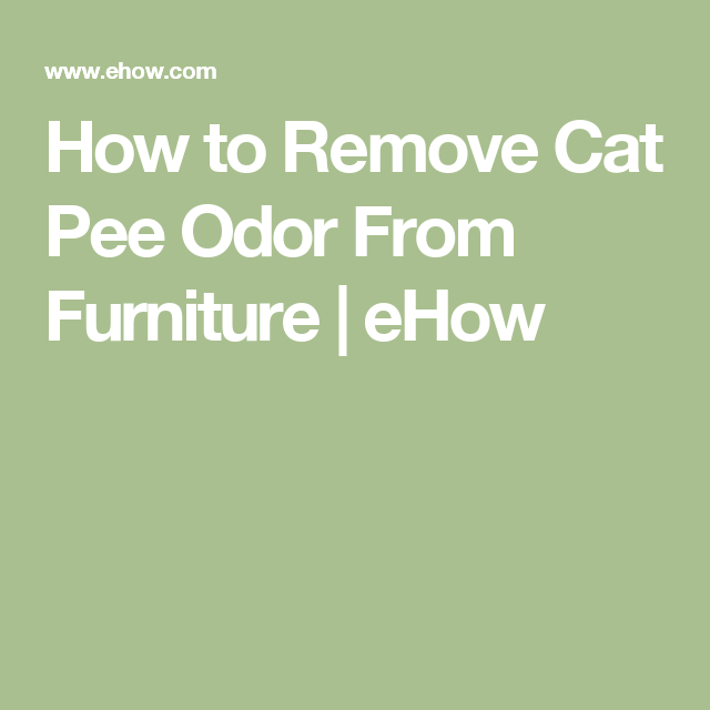 Cleaning Cat Urine Out Of Leather Furniture