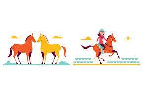 parko polo - Recherche Google