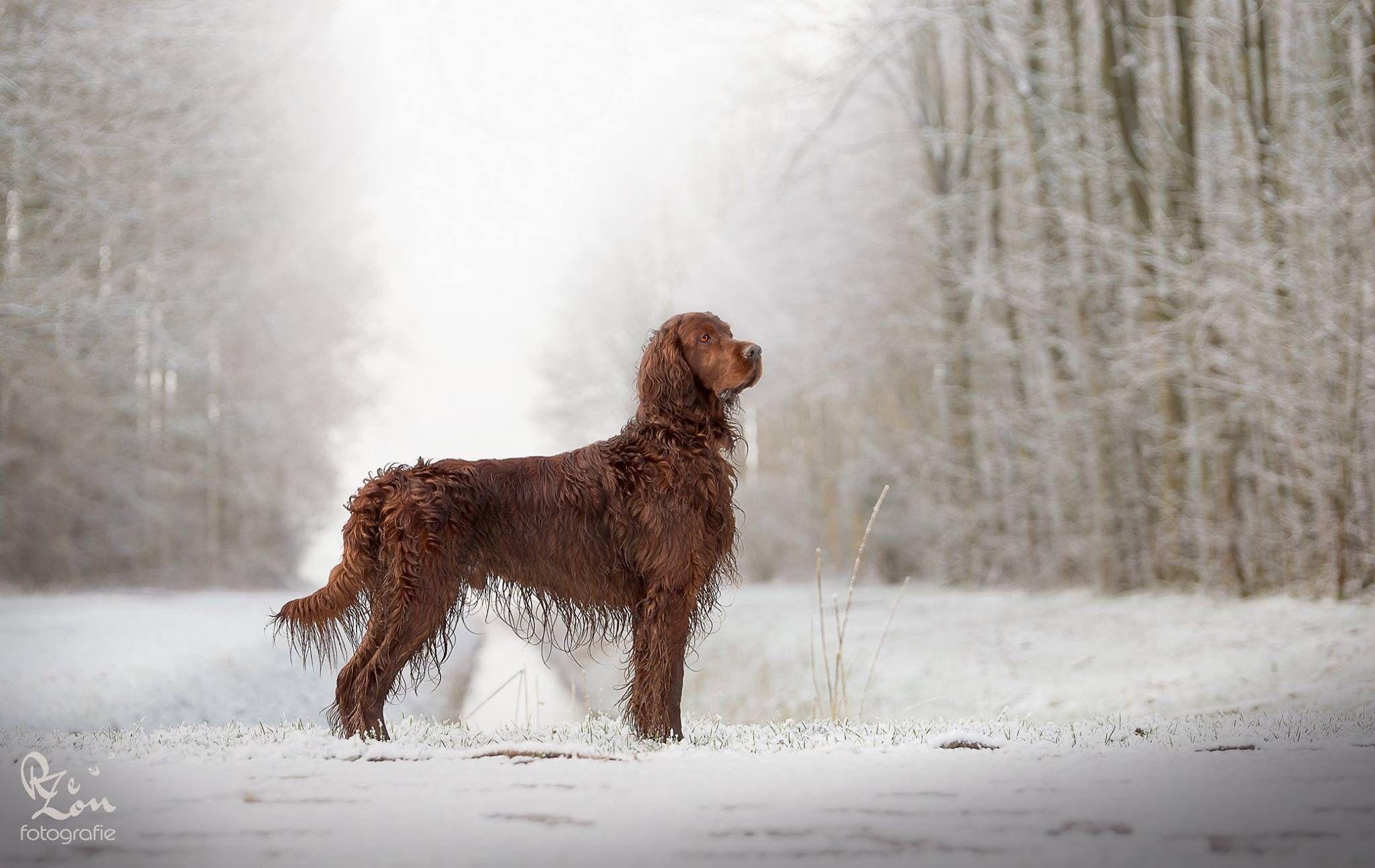 Flynn in de sneeuw