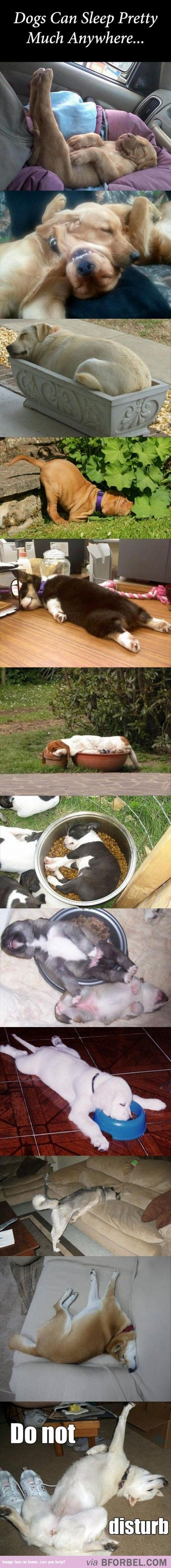Dogs Can Sleep Anywhere, In Any Position..