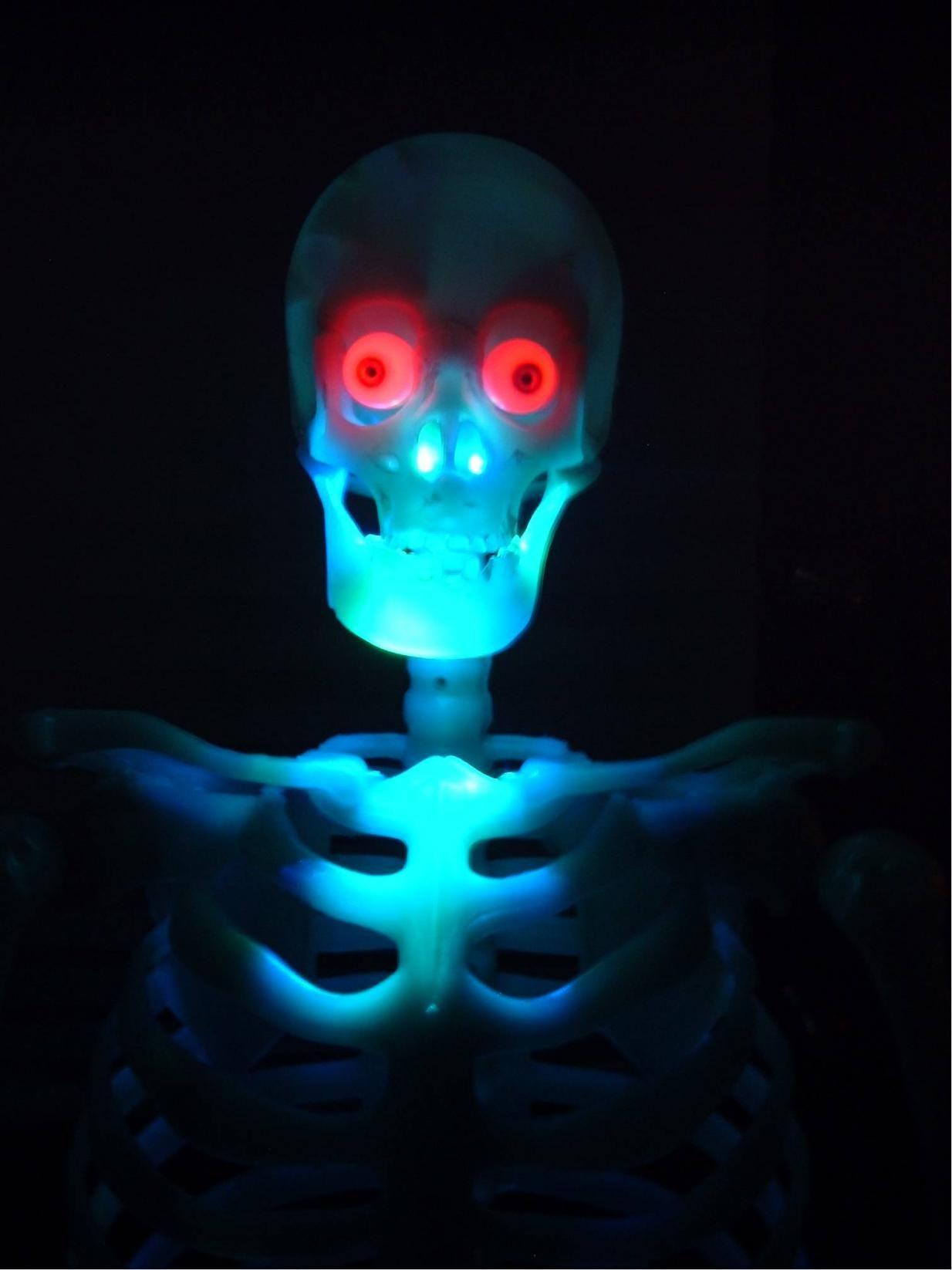 Static glow in the dark skelly Halloween 2015 - Glow-in-the-Dark - glow in the dark halloween decorations