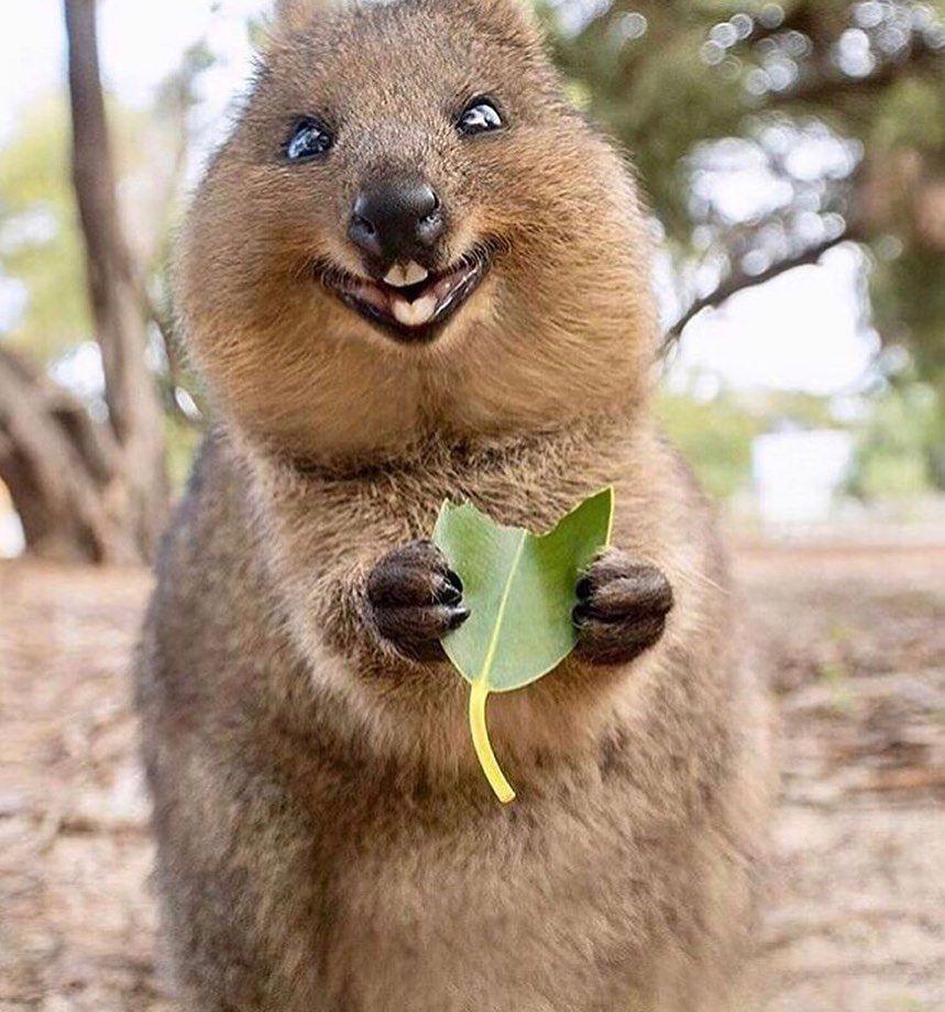 Pin On Nature Animals