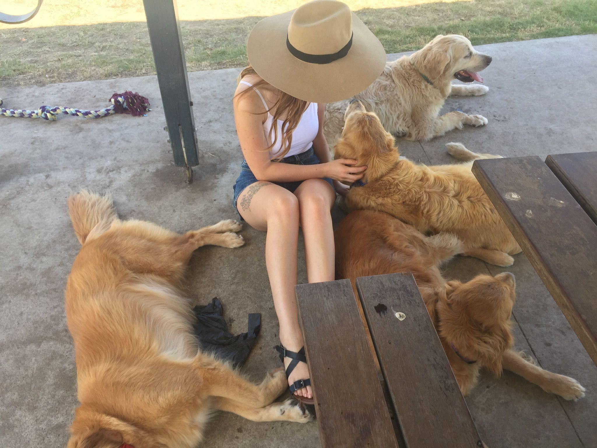 Golden Retriever Goals Brisbane Dogs Peaches Vogue Golden