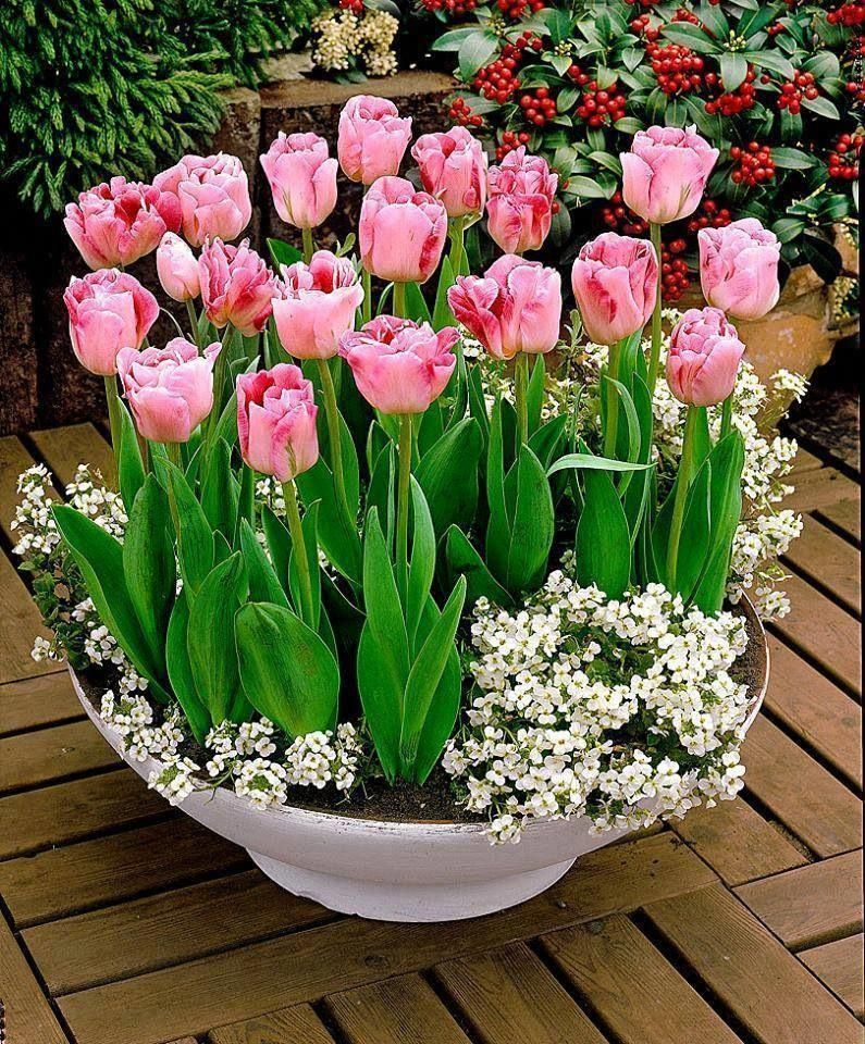 One Way To Beautify The Entrance Of Your Home Is To Place Some Flower Pots Close To The Door Here Are Several Container Flowers Bulb Flowers Garden Containers