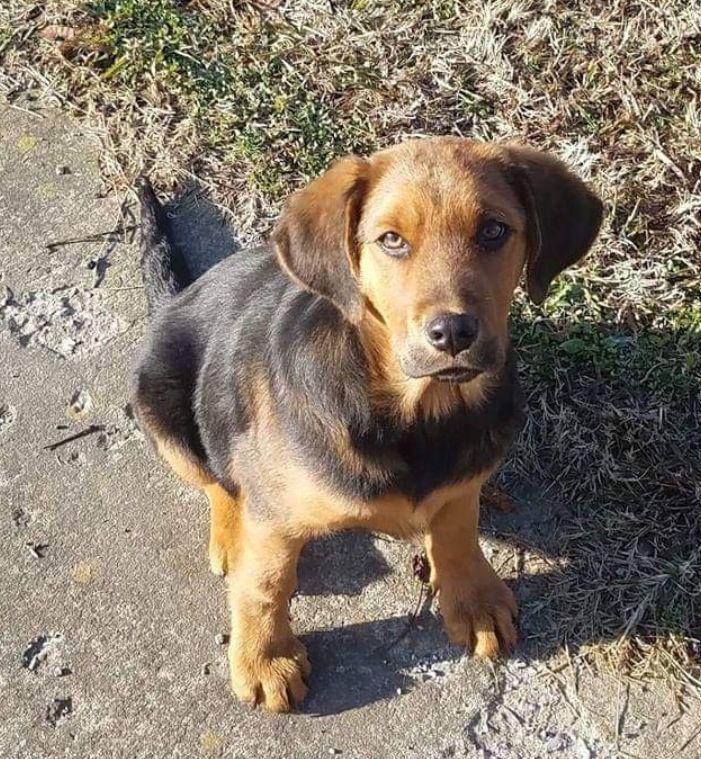 Adopt Church on Bulldog breeds, Beagle puppy, Dogs