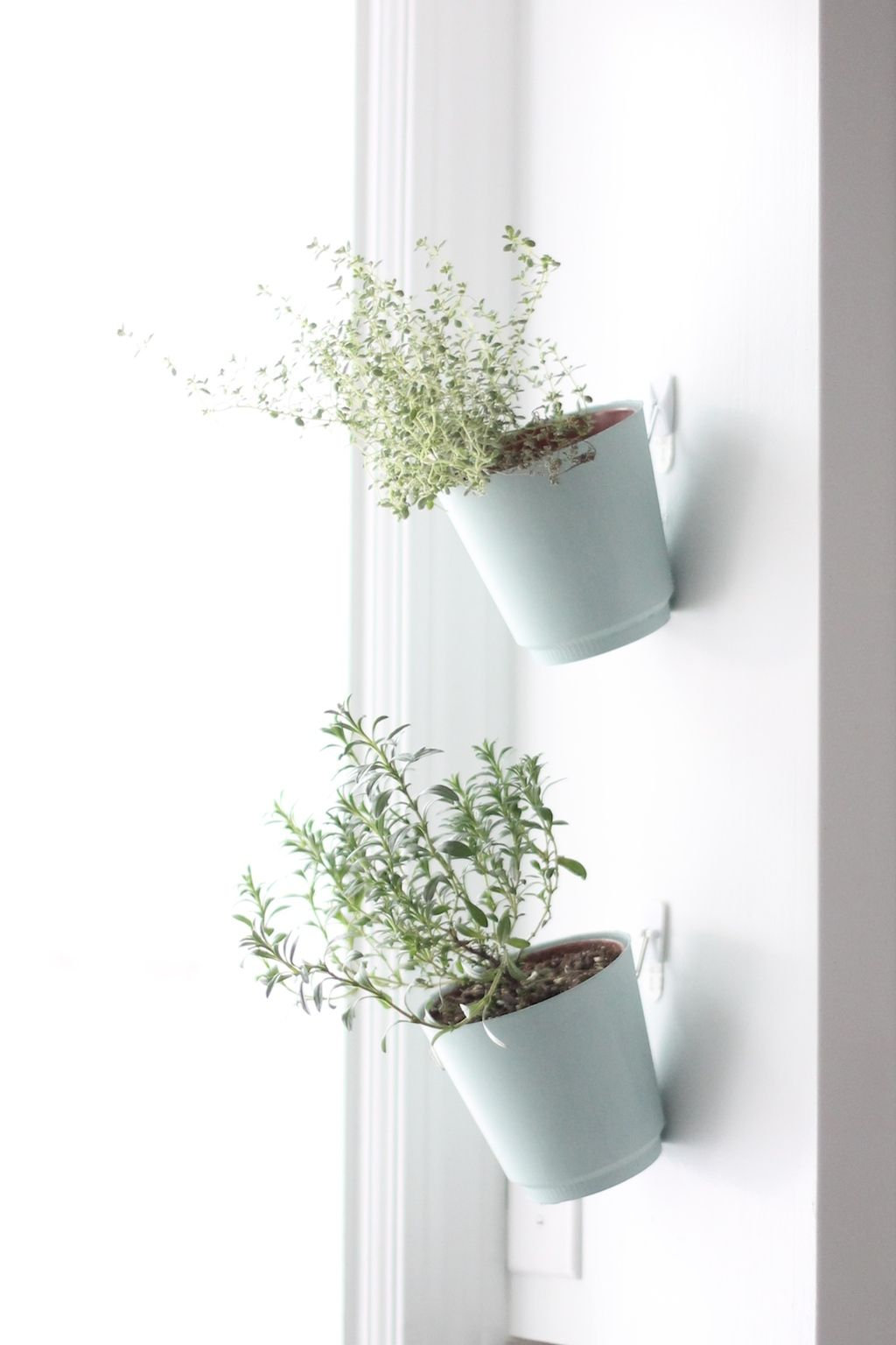 DIY Hanging Herb Garden. Future Home Hanging Mugs On Kitchen Window Sill?  With Spoon