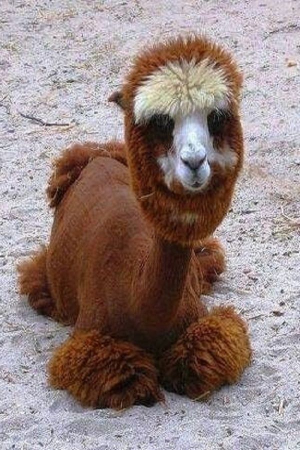 9 rare but cute animals that you never even knew existed | animals