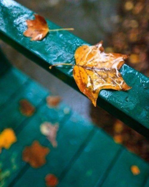 A photo. It's fall.  I like the colours