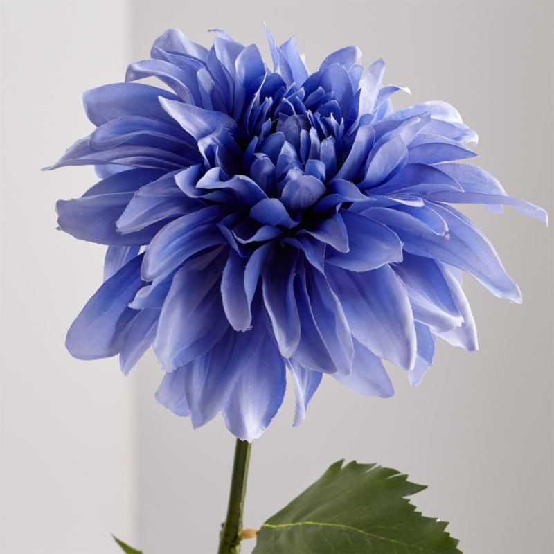 Blue Dahlia Flower Stem Reviews Crate And Barrel Dahlia Flower Beautiful Flowers Pictures Beautiful Flowers Photography