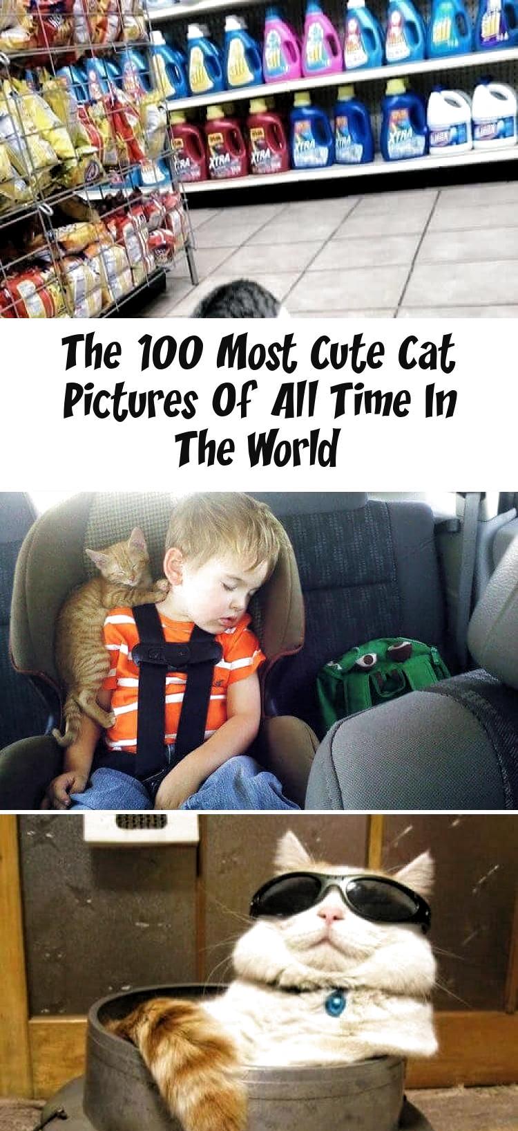 Squeeeee! white kitten licks window - kitty memes cat humor funny joke gato chat