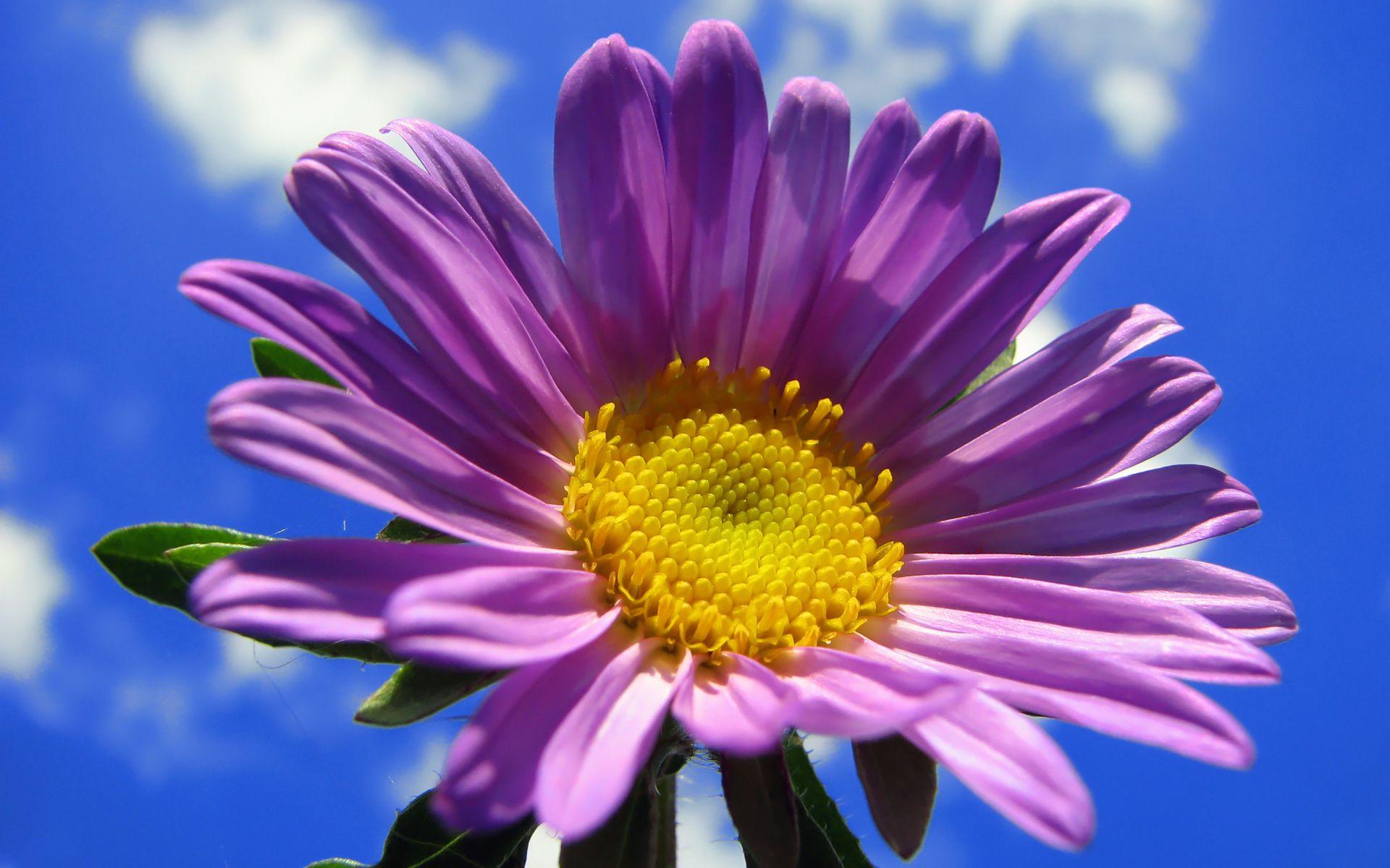 Wallpapers flower http69hdwallpaperswallpapers flower wallpapers flower http69hdwallpaperswallpapers flower beautiful mightylinksfo