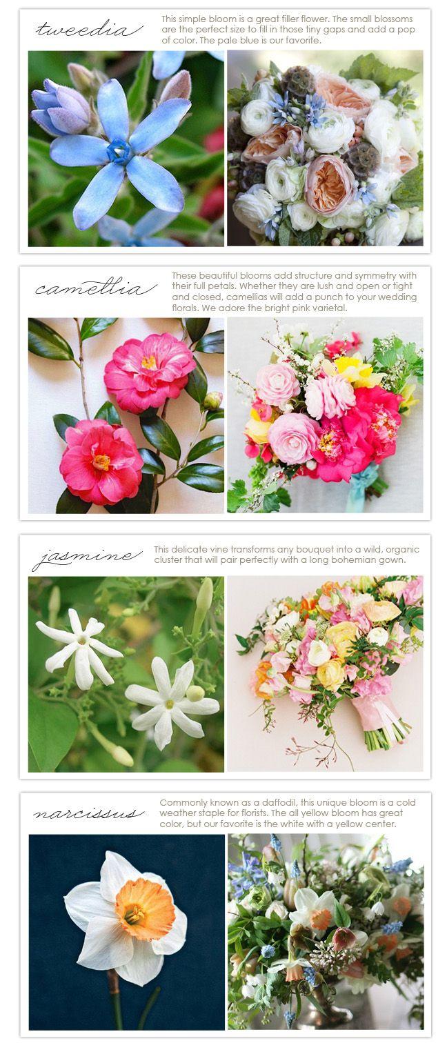 Flowers Types In Season January Flower Types Pinterest