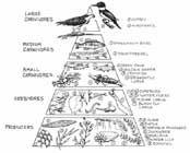 pirámide alimentaria marina