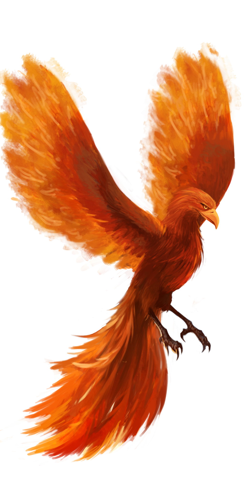 Phoenix Tattoo Final Phoenix Tattoo Phoenix Tattoo Design Phoenix Images