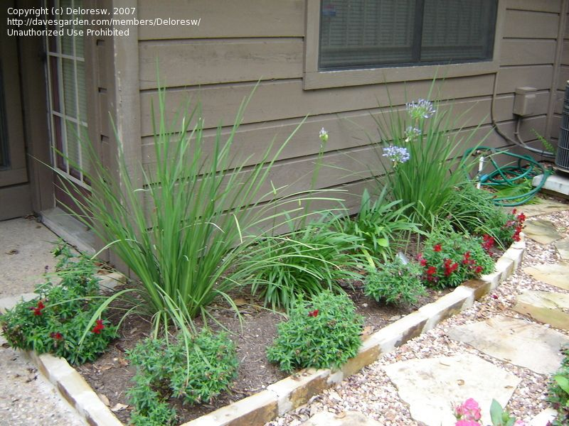 easy landscaping ideas beginners