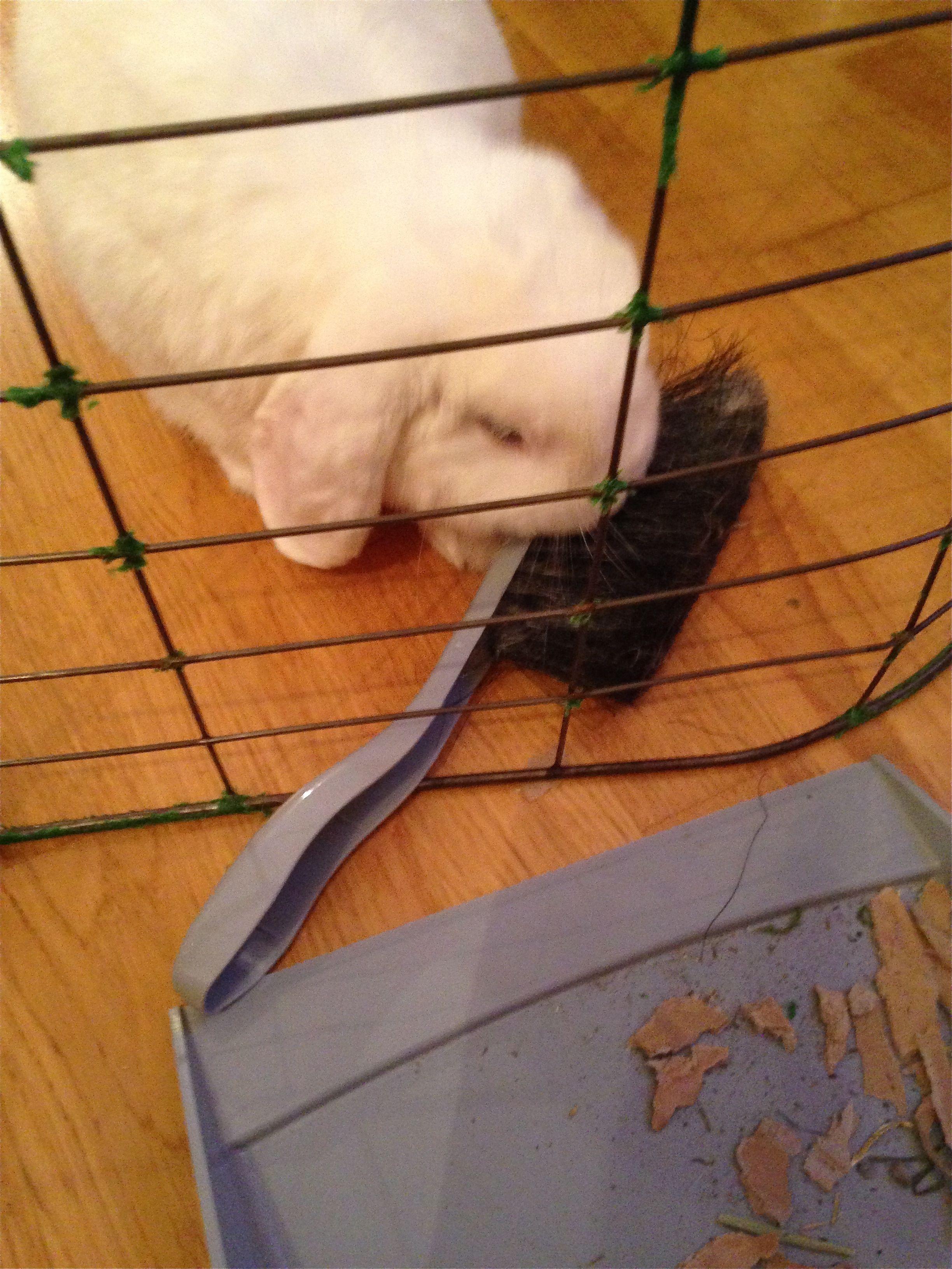 Jeg hjelper til med å gjøre rent ser du vel :) / I´m helping mommi cleaning of course!! Duncan 2014/IJ