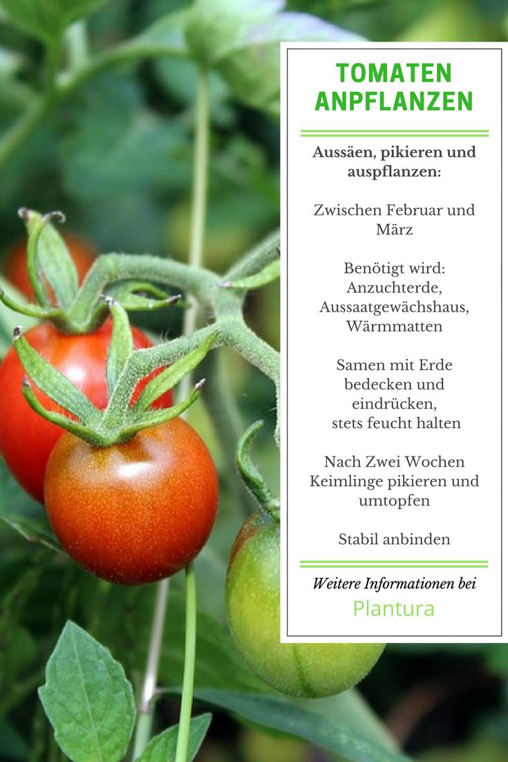 Tomaten Aussaen Pikieren Auspflanzen Anleitung Mit Video
