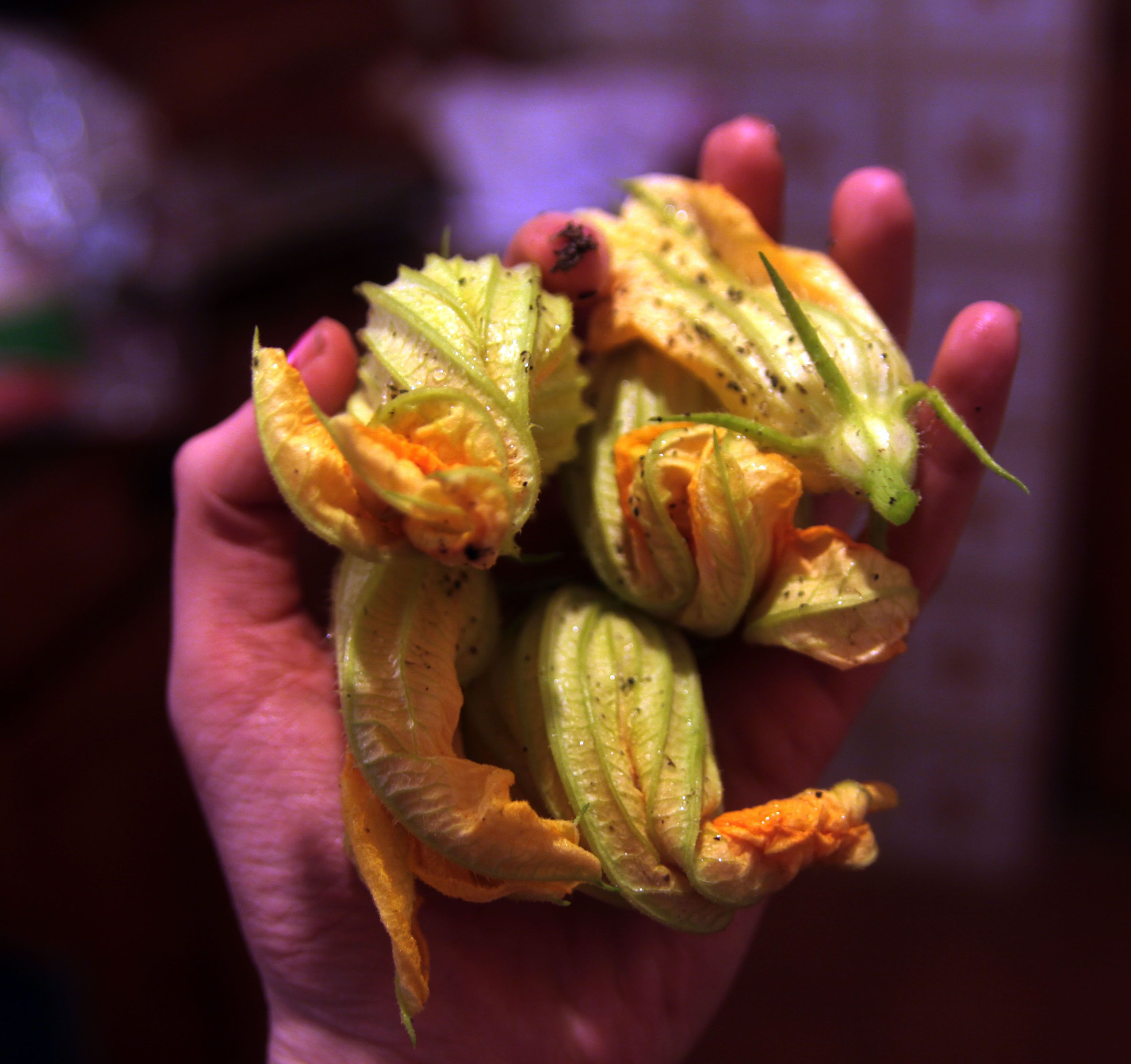 My First Zucchini Flowers From My Veggie Patch At My Country Home And  Studio In Rome