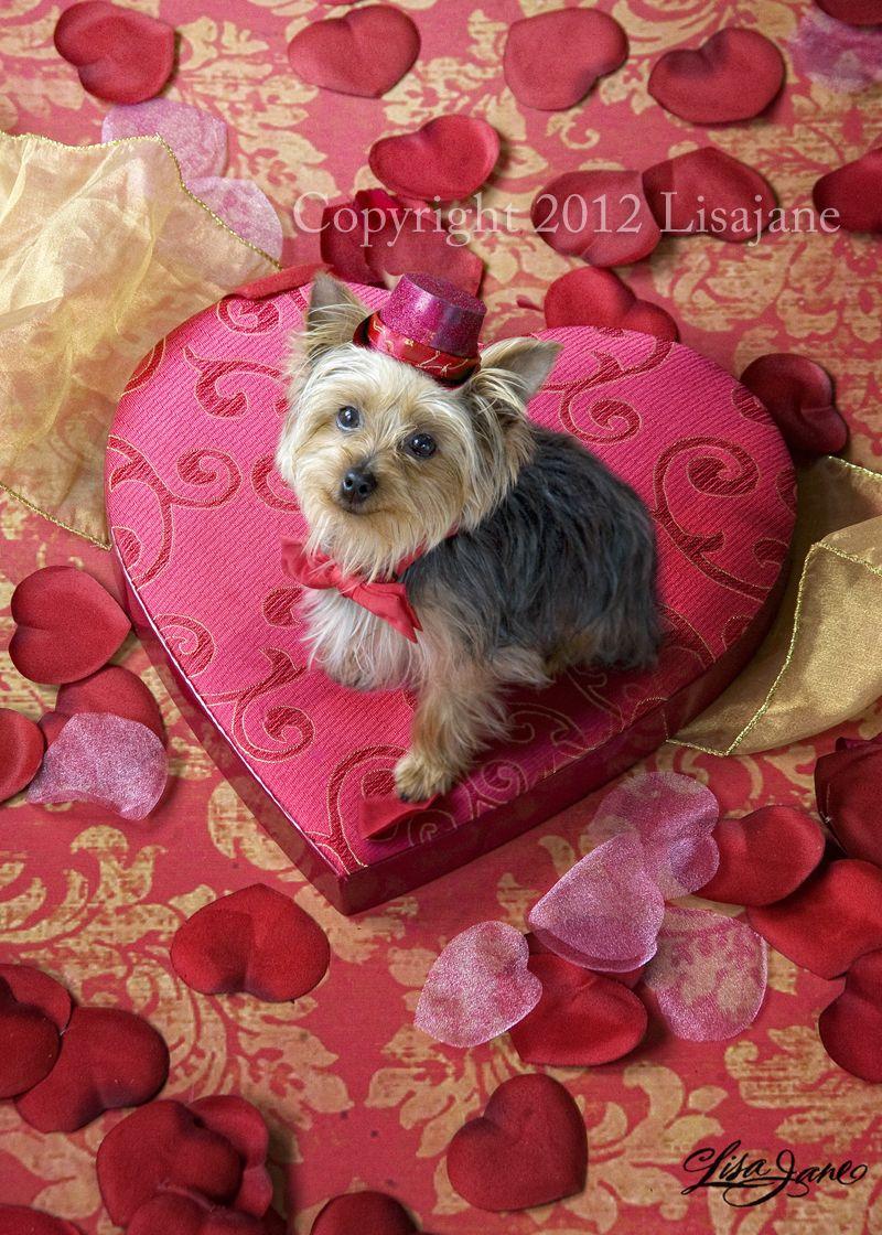 Canine Whelping Yorkie Wwwtopsimagescom