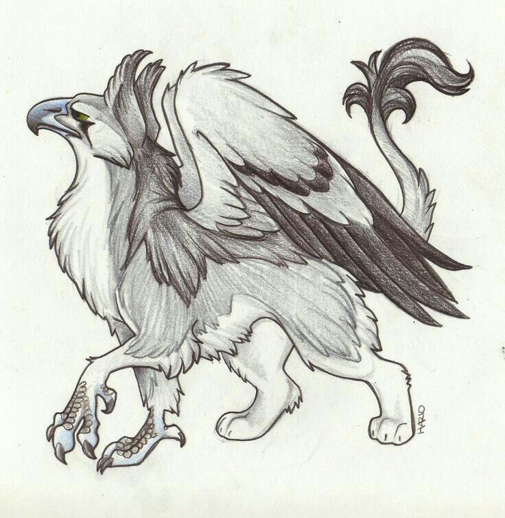 Hipogrifo Griffin Drawing Creature Art Animal Sketches