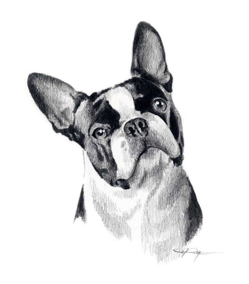 Pin On Boston Terriers