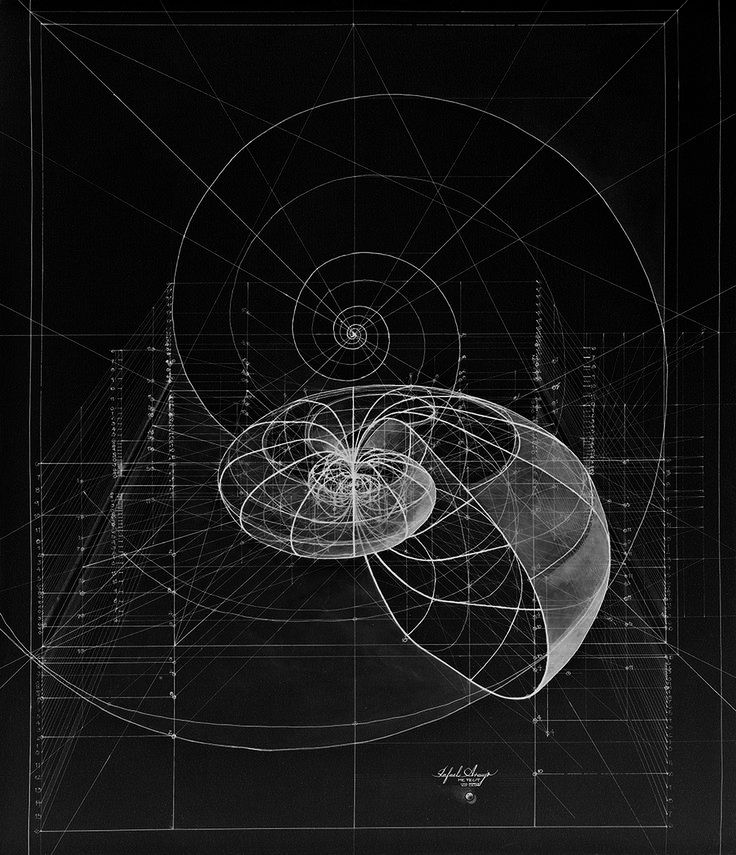 Chaosophia218 logarithmic spirals of the at dre ms in for Golden ratio artwork