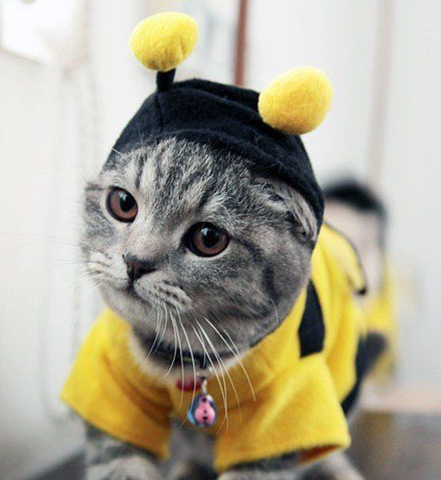 Quatang Gallery- 28 Halloween Costumes For Cats That Will Put A Smile On Your Face Costume Chat Animaux En Costumes Chat Habille