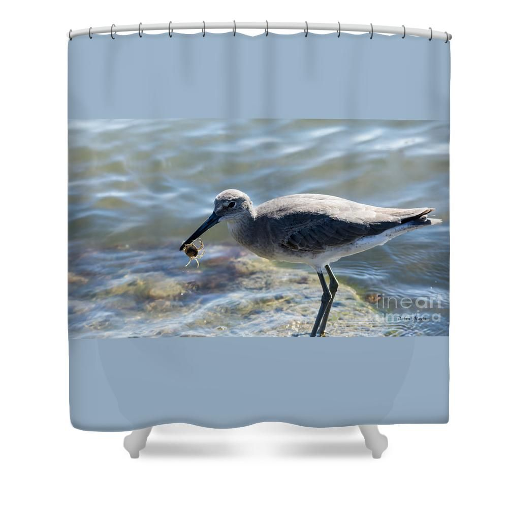 Willet With A Crab Shower Curtain By Debra Martz