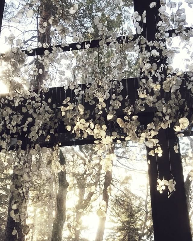 Video: Magical lunaria installation by Sarah Winward.