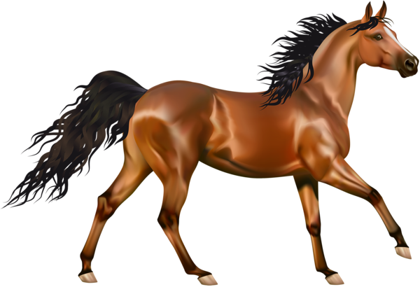 Transparent Brown Horse Png Clipart Horses Beautiful Horse Pictures Horse Background