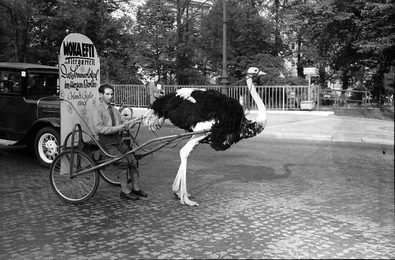 Berlin: Vogel Strauß tragt Reklame halber durch die Straßen