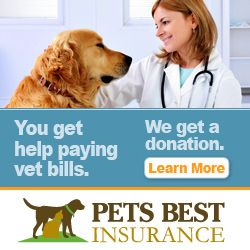 Pets Best Review Putting Your Pets First Caninejournal Com Pet Insurance Reviews Pet Insurance Cost Pet Care Business