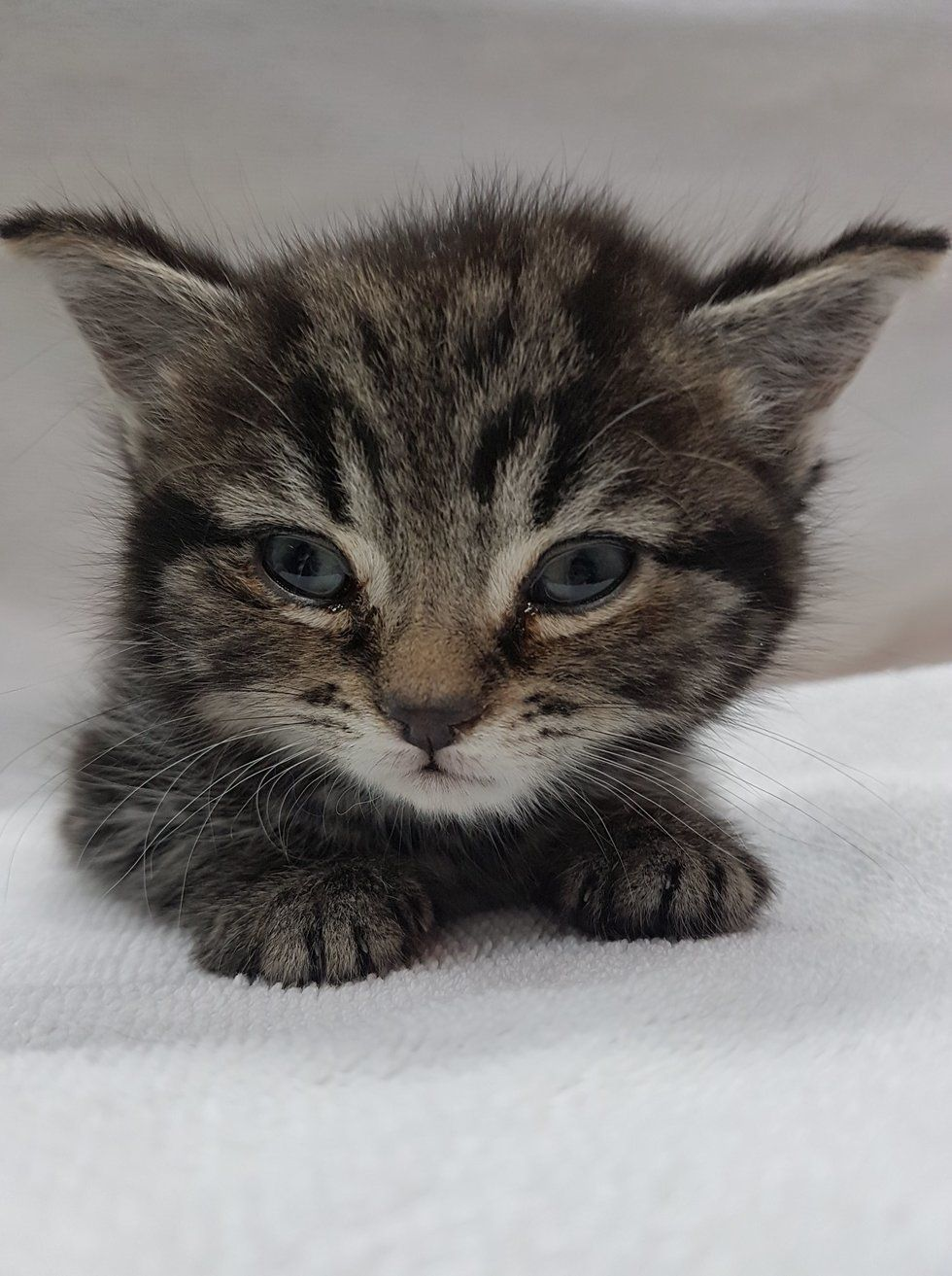 A Tiny Kitten Was Found Abandoned In A Park She Was Brought To A Veterinary Clinic Where They Discovered She Needed A Kittens 6 Week Old Kitten Tiny Kitten