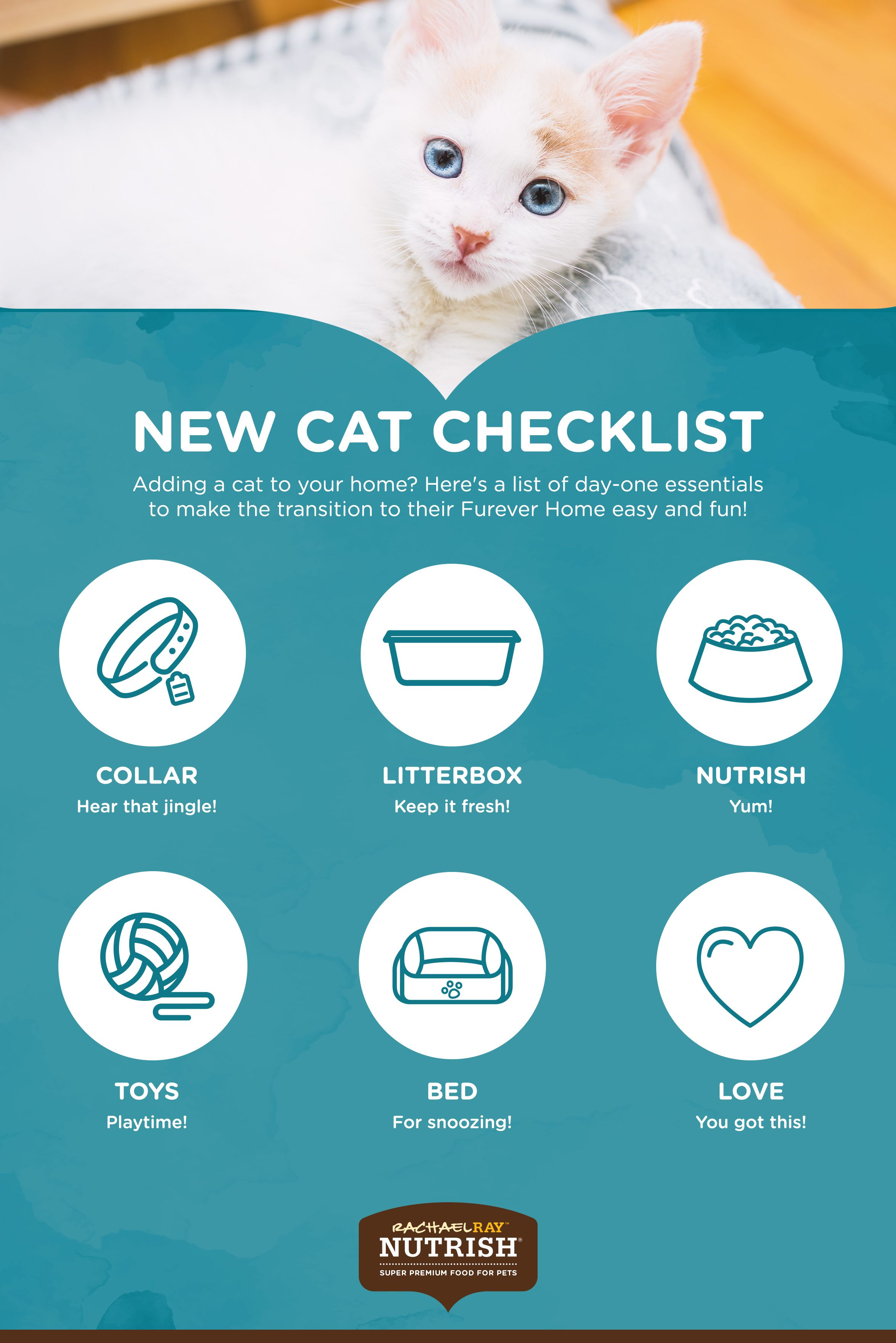 When A New Cat Comes Home Consult Our Infographic For Important