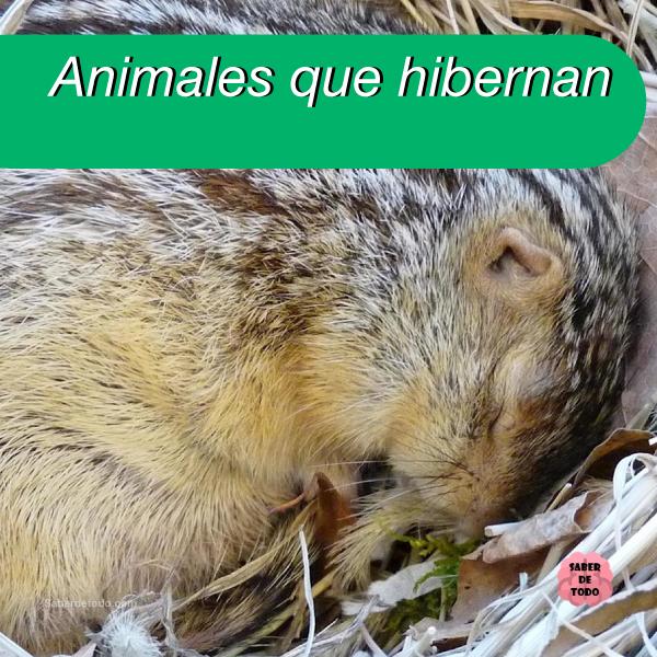 Sabes Por Qué Hibernan Los Animales Te Contamos En Que Consiste La Hibernación Dormición Y To Animales Que Hibernan Caracteristicas De Los Animales Animales