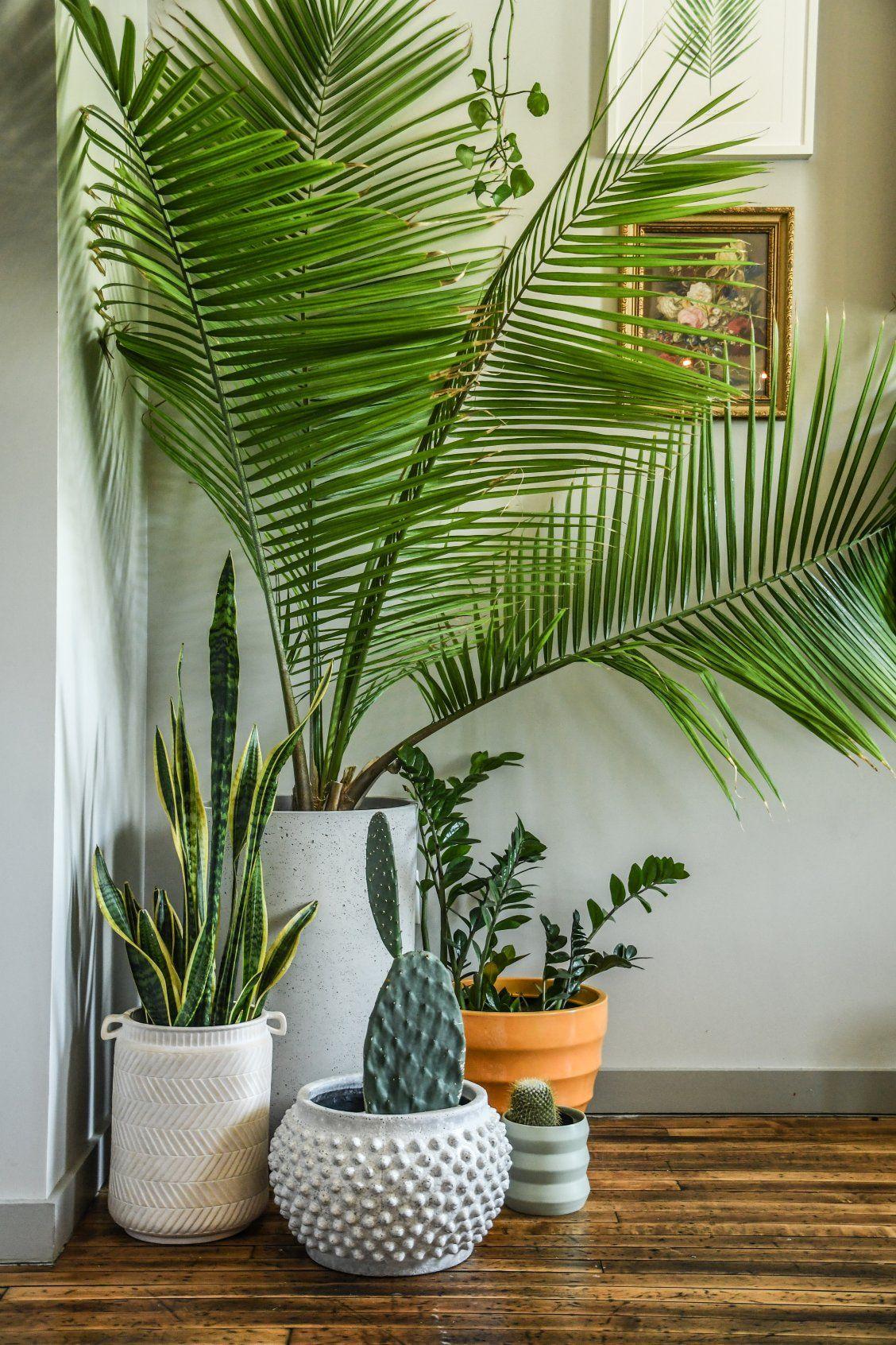 Seminyak Grey Planters Cb2 Plant Decor Indoor Plant Decor Bedroom Plants