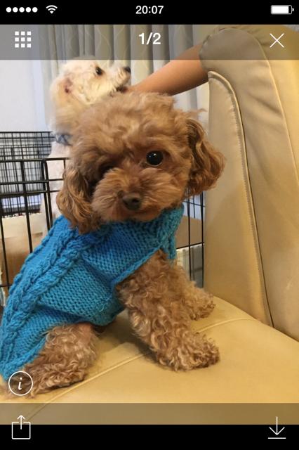 縄編みの犬セーターの作り方 その他 ファッション アトリエ 犬のセーター 犬 服 手作り 犬用の服