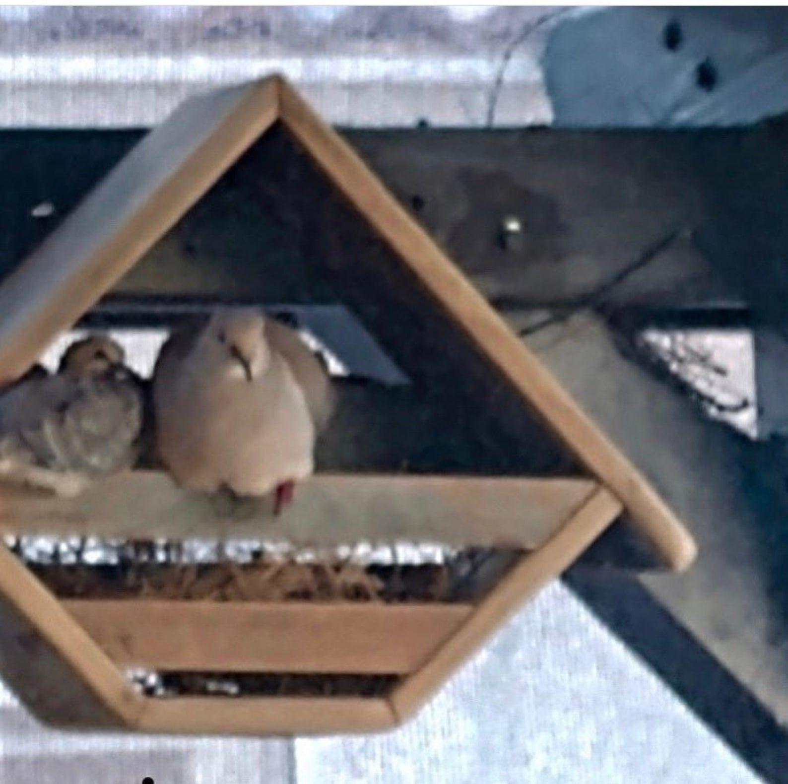 Small dove nesting box Etsy Dove nest, Nesting box, Doves