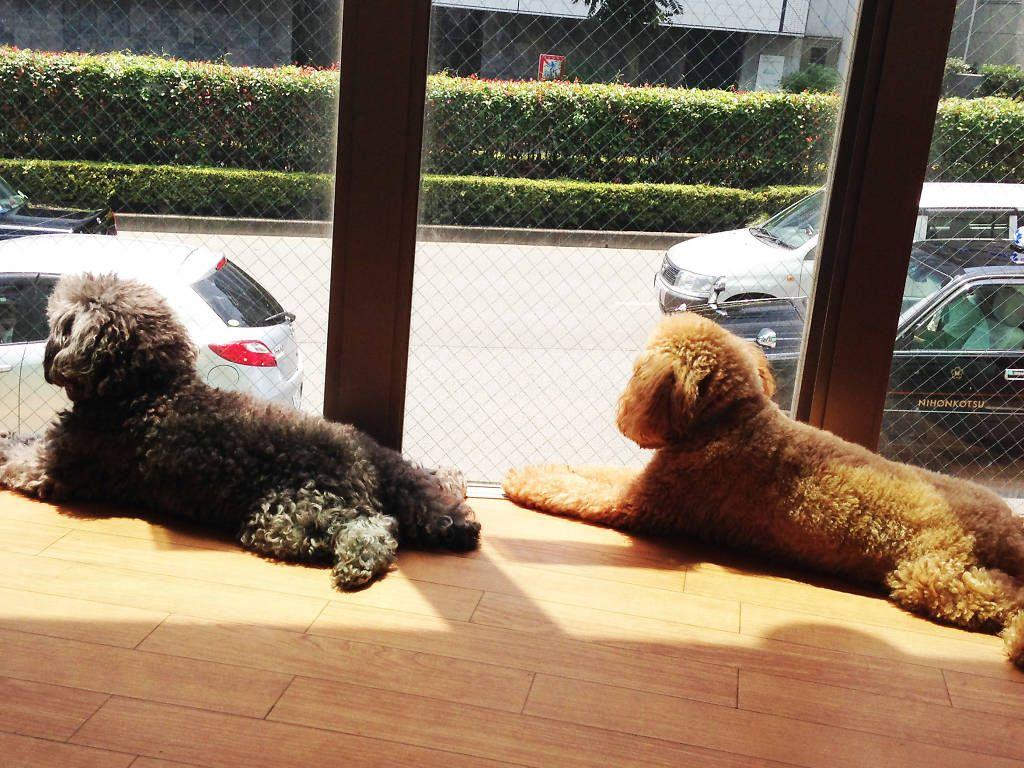 Best animal and pet cafés in Tokyo Cat cafe japan, Dog