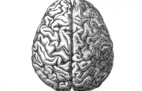 http://www.chrisonea.com/wp/wp-content/uploads/2010/09/right_vs_left_brain_emotional_communication-465x300.jpg