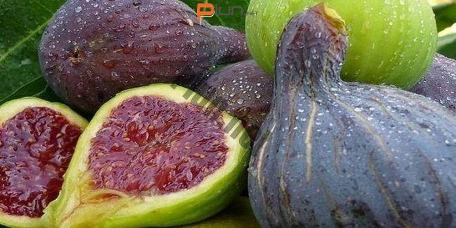Combate la diabetes, colesterol y ulceras con los higos