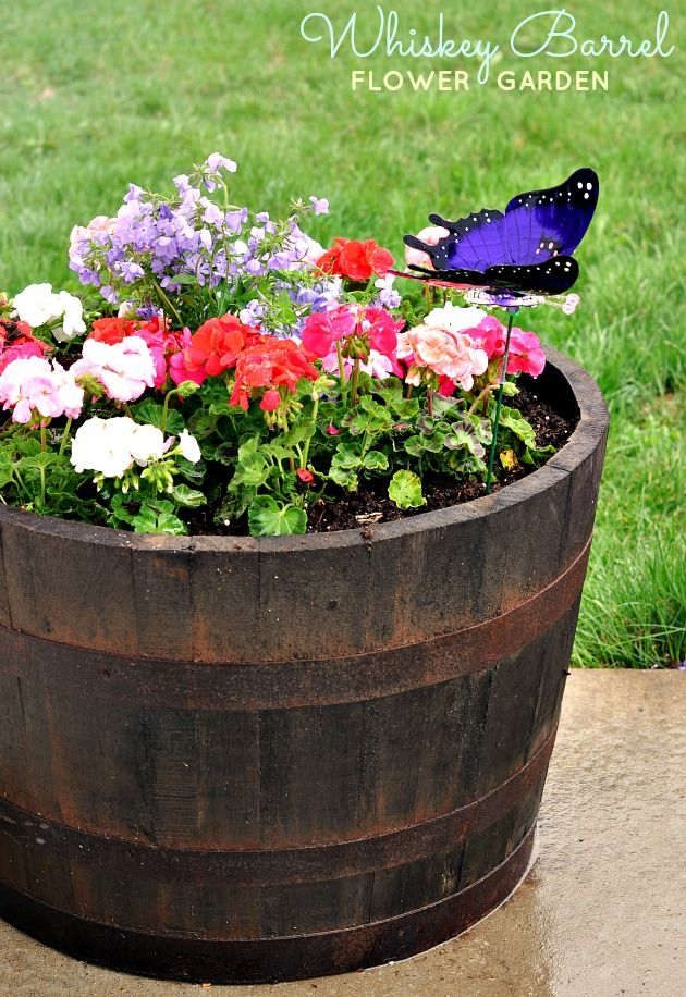 Check Out This Beautiful Whiskey Barrel Planter Project Made By Digin Blogger Cat From Food Family Fi Barrel Flowers Whiskey Barrel Flowers Outdoor Flowers