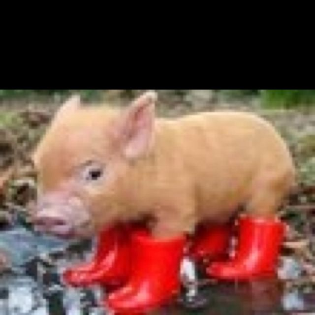want these gumboots for daisy