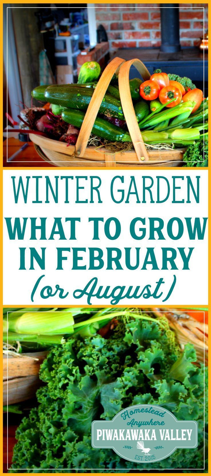 What to Plant in your Winter Vegetable Garden in February (or August!) #veggiegardens