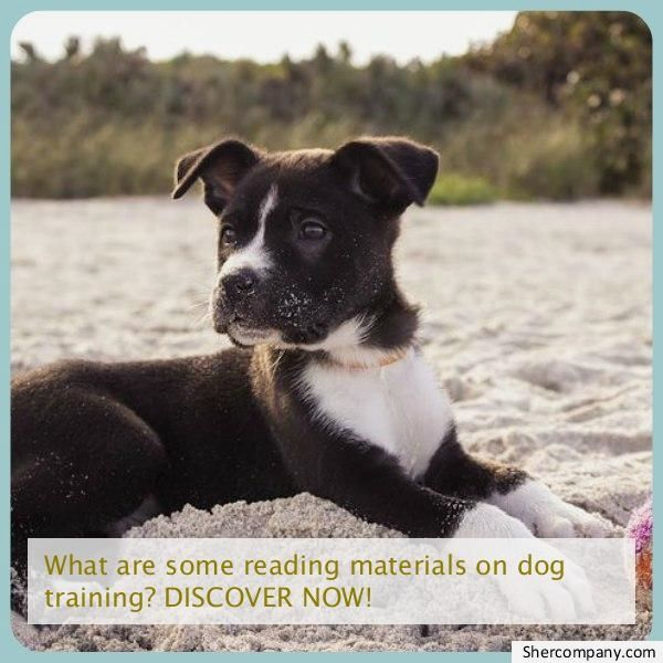 New Dog Training Check Out The Pic For Many Dog Obedience And